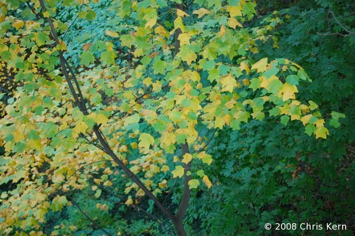 Autumn Leaves in Shade, Washington, District of Columbia, USA (2008)