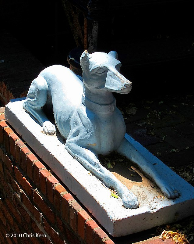 District Dog, Washington, District of Columbia, USA (2010)