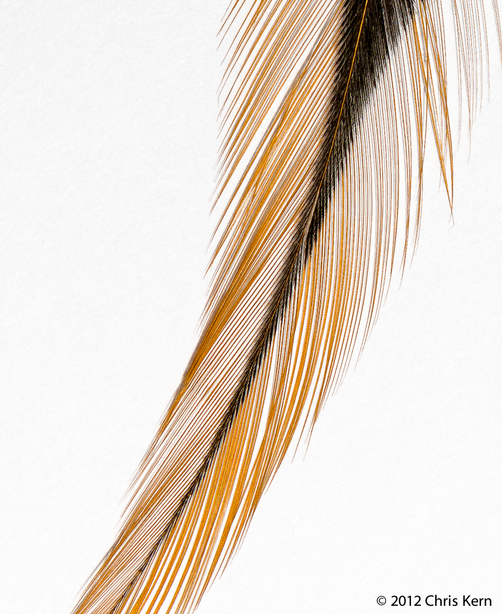 Feather, Washington, District of Columbia, USA (2012)